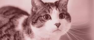 cat-bn-retro